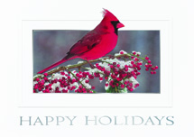 Red On Red Holiday Cards